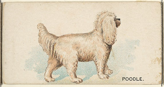 Poodle, from the Dogs of the World series for Old Judge Cigarettes
