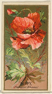 Poppy (Papaver Rhoeas), from the Flowers series for Old Judge Cigarettes