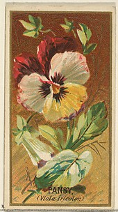 Pansy (Viola tricolor), from the Flowers series for Old Judge Cigarettes