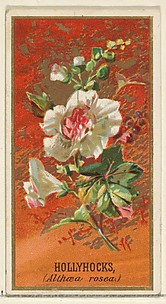 Hollyhocks (Althea rosea), from the Flowers series for Old Judge Cigarettes