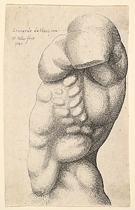 Male Torso from the Side