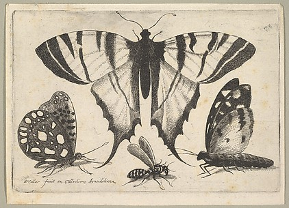 Three Butterflies and a Wasp, from Butterflies and Insects, Muscarum scarabeorum
