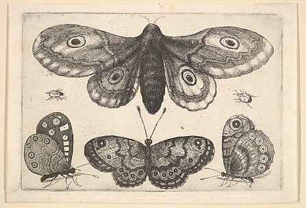 A Moth, Two Butterflies and Two Beetles, Butterflies and Insects, Muscarum scarabeorum