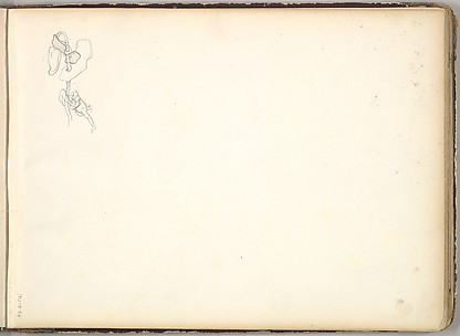 A Flower (in Sketch Book With Drawings on Twenty-six Leaves)