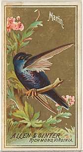 Martin, from the Birds of America series (N4) for Allen & Ginter Cigarettes Brands