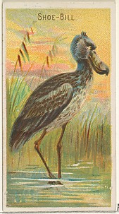 Shoe-Bill, from the Birds of the Tropics series (N5) for Allen & Ginter Cigarettes Brands