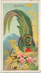 Quetzal, from the Birds of the Tropics series (N5) for Allen & Ginter Cigarettes Brands