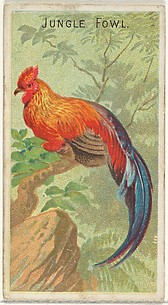 Jungle Fowl, from the Birds of the Tropics series (N5) for Allen & Ginter Cigarettes Brands