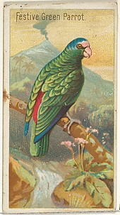 Festive Green Parrot, from the Birds of the Tropics series (N5) for Allen & Ginter Cigarettes Brands