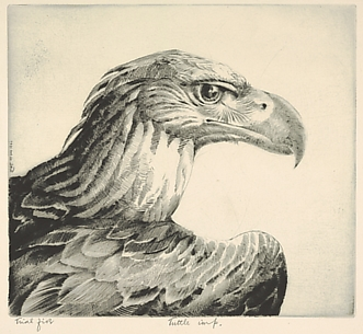 Aquiline (Eagle Head)