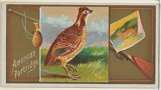 American Partridge, from the Game Birds series (N13) for Allen & Ginter Cigarettes Brands