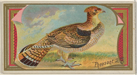 Pheasant, from the Game Birds series (N13) for Allen & Ginter Cigarettes Brands