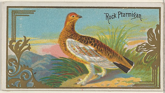 Rock Ptarmigan, from the Game Birds series (N13) for Allen & Ginter Cigarettes Brands