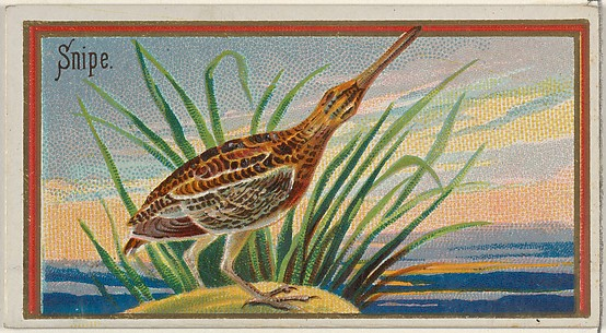 Snipe, from the Game Birds series (N13) for Allen & Ginter Cigarettes Brands