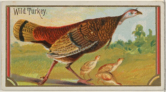 Wild Turkey, from the Game Birds series (N13) for Allen & Ginter Cigarettes Brands