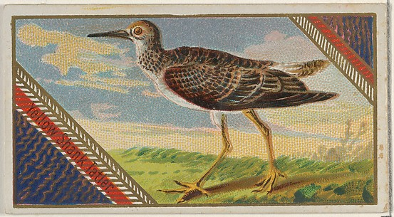 Yellow Shank Tatien, from the Game Birds series (N13) for Allen & Ginter Cigarettes Brands