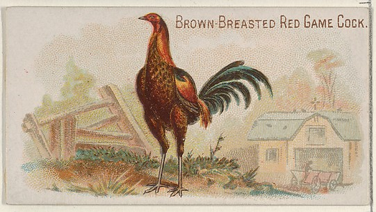 Brown-Breasted Red Game Cock, from the Prize and Game Chickens series (N20) for Allen & Ginter Cigarettes