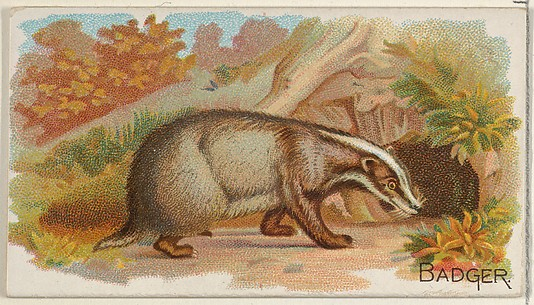 Badger, from the Quadrupeds series (N21) for Allen & Ginter Cigarettes
