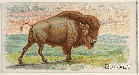 Buffalo, from the Quadrupeds series (N21) for Allen & Ginter Cigarettes