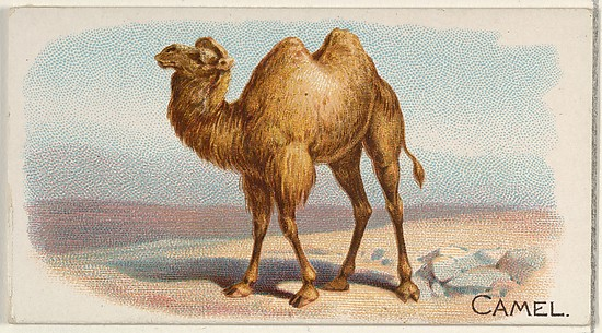 Camel, from the Quadrupeds series (N21) for Allen & Ginter Cigarettes