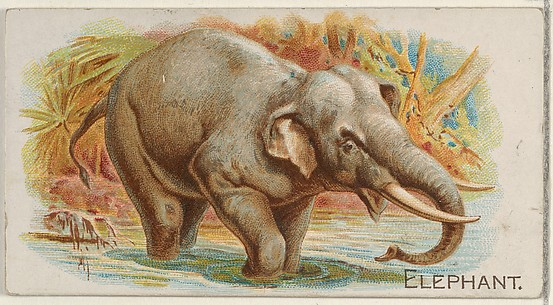 Elephant, from the Quadrupeds series (N21) for Allen & Ginter Cigarettes