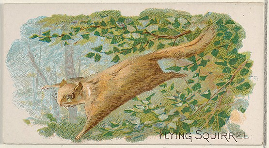 Flying Squirrel, from the Quadrupeds series (N21) for Allen & Ginter Cigarettes