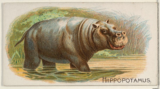 Hippopotamus, from the Quadrupeds series (N21) for Allen & Ginter Cigarettes