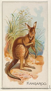 Kangaroo, from the Quadrupeds series (N21) for Allen & Ginter Cigarettes