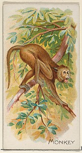 Monkey, from the Quadrupeds series (N21) for Allen & Ginter Cigarettes