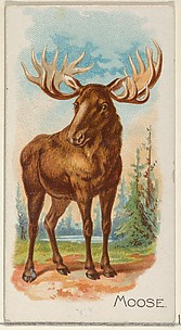 Moose, from the Quadrupeds series (N21) for Allen & Ginter Cigarettes