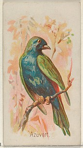 Azuvert, from the Song Birds of the World series (N23) for Allen & Ginter Cigarettes