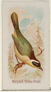 Maryland Yellow-throat, from the Song Birds of the World series (N23) for Allen & Ginter Cigarettes