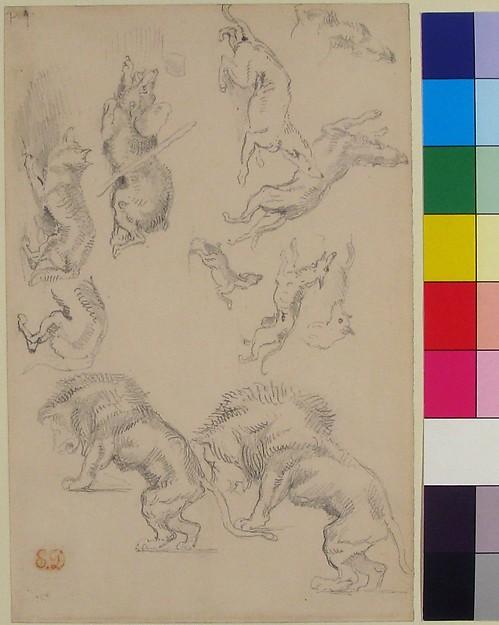 Studies of Animals