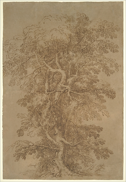 A Large Tree