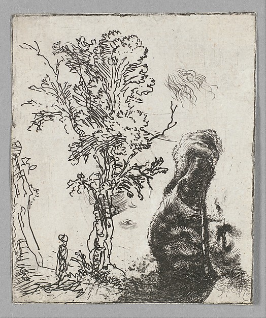 Sheet with Two Studies:  A Tree and the Upper Part of a Head of Rembrandt Wearing a Velvet Cap