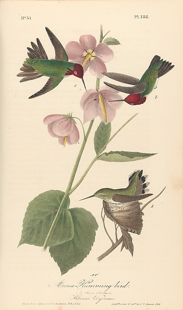 The Birds of America from Drawings Made in the United States