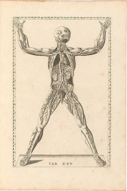 Fascinating Historical Picture of  with Tabulae Anatomicae in 1728