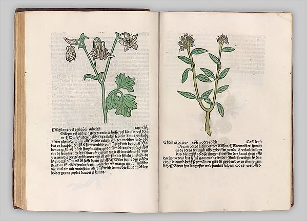 Fascinating Historical Picture of  with Herbarius - Gart der gesuntheit - Hortus sanitatis in 1485