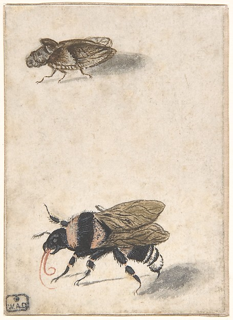 A Bumble Bee and a Fulgoroid