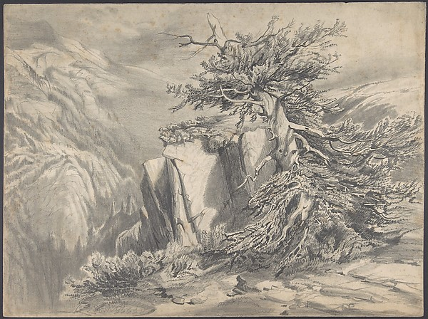Broken Tree in  Moutainous Landscape