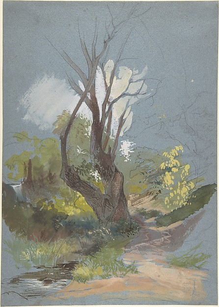 Mountain Path with a Tree