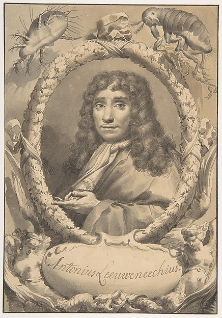 The Dutch Microscopist Anton van Leeuwenhoek