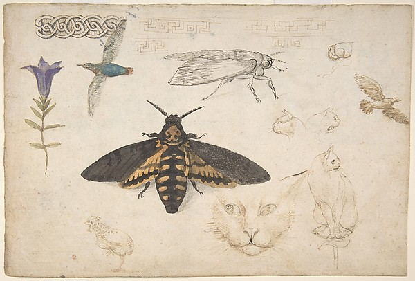 Studies of a Gentian, Moth, Birds, Cats, Interlacing Motif, and Greek Frets (recto); Ornamental Studies with Figures (verso)