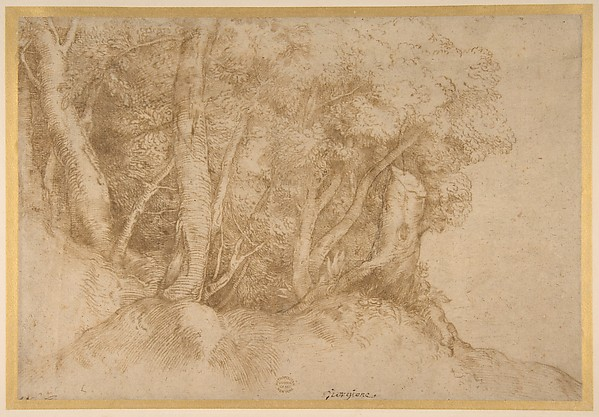 Fascinating Historical Picture of Titian with Group of Trees in 1485