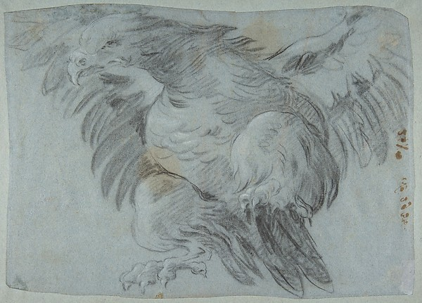 An Eagle with Wings Spread
