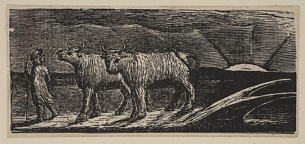 Unyok'd Heifers, Loitering Homeward, from Thornton's Pastorals of Virgil