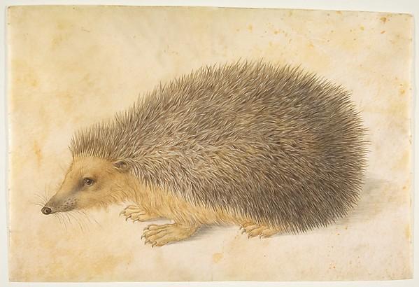 A Hedgehog (Erinaceus roumanicus)