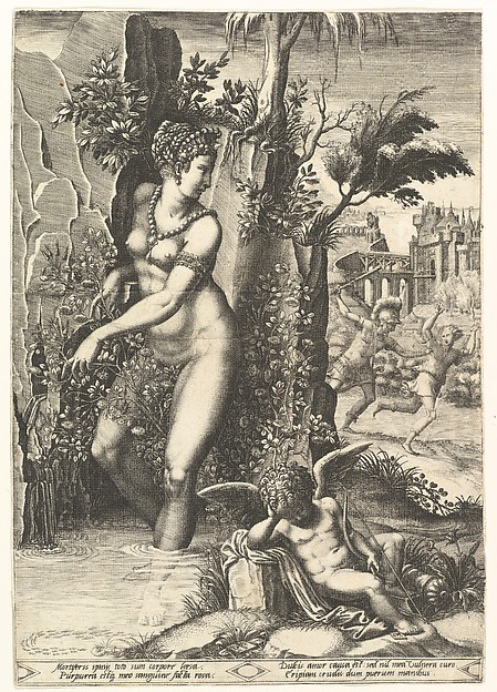 Venus and the Rose
