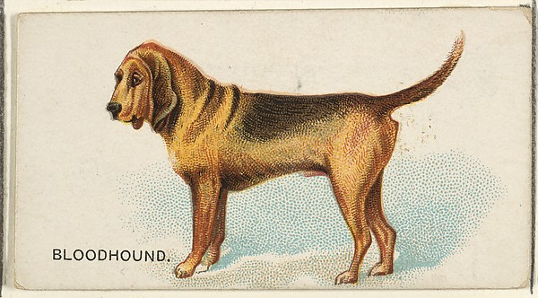 Bloodhound, from the Dogs of the World series for Old Judge Cigarettes