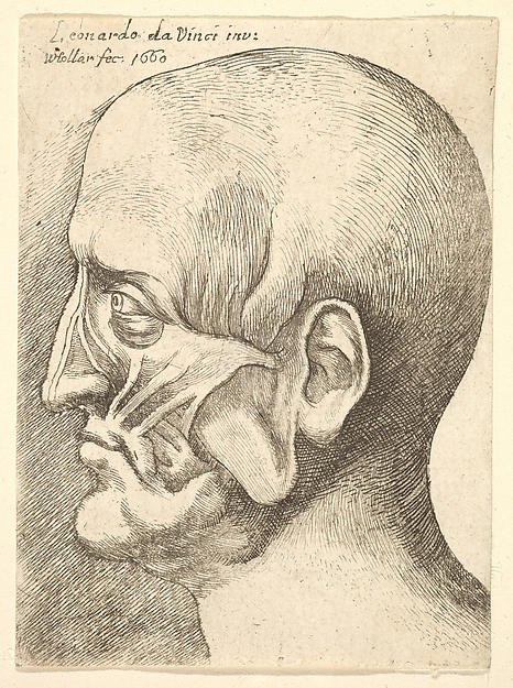 This is What Leonardo da Vinci and Ecorche head of a man in profile to left Looked Like  in 1660